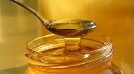 Μέλι, το δώρο των θεών στον άνθρωπο και στην φύση
